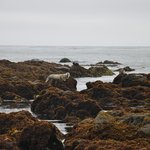 Seals on the rocks just in front of the Hotel