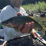 North Fork Flathead - Cutthroat Trout