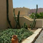 Giant cactus by our room