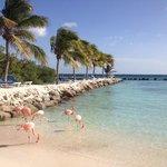 Aruba private island