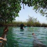 Floating in the mangroves..