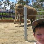 Elephant and Mark..