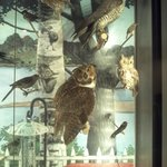 Some birds on the impressive collection on the Nature wing of the museum