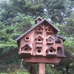 The owners opt for a birdmotel vice birdhouse