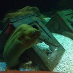 Scary Eel