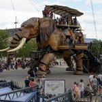le fameux éléphant