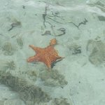 Starfish buddy