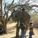 Learning more about elephants
