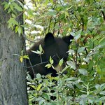 A bear off the main road