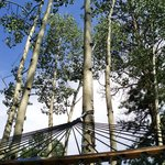 hammock view of sky and aspen