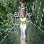 Excursion from the hotel to a treetop walk