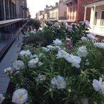 the beautiful flowers on the balcony
