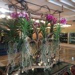 Orchids outside the breakfast buffet