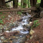 McWay Creek