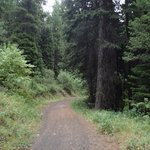 Easy portion of Huckleberry trail
