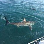 Shark tours.
