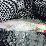 Pink Salmon off the beach!
