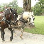 Horse-drawn wagon tour