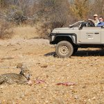 Observing cheetah and cub on their kill!