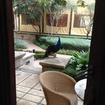 peacocks strolling right outside our room.