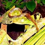 serpent tour de nuit