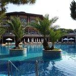 pool small palm islands