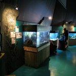Ocean Lab