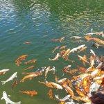 Pesci del lago