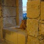 Cat of Ferretti :)