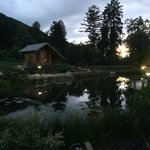 Un chello de nuit avec leur petit étang, ces derniers sont sur le côté du parc et son donc très