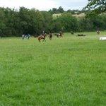 Camp et chevaux
