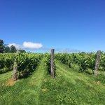 Annapolis Highland Vineyards Foto