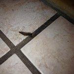 Critters crawling around!