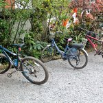 Free bikes for guests' use