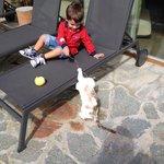 Relax in giardino con i gatti di Daniel