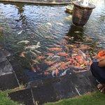 鯉のエサやり体験