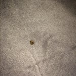 Room not cleaned - Bugs