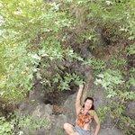 огромное дерево платан в деревне Краси.Ствол .обхватывают 20 человек