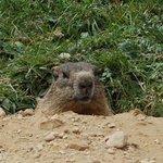 Marmotta incontrata durante le escursioni