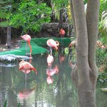Flamingo Pond at resort
