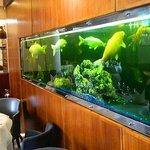 Φωτογραφία: Pagoda Chinese Restaurant