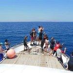 Delfine neben dem Boot