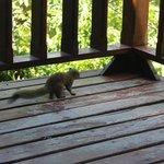petit visiteur matinal :)