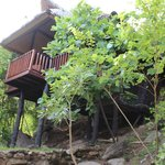 tree top bungalow