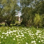Wild-flower meadows
