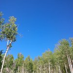 Aspen Grove on Woodspur Lodge property
