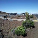 Silversword garden at summit