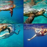we met the turtle on the house reef!