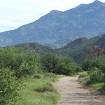 Catalina State Park hiking path...