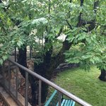 Just after the rain, the tree and park bench in front of my room.
